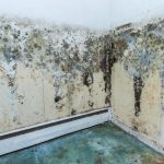 Do You Suspect Mold in Your Commercial Building?