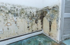 Finding mold in your commercial building | Mold remediation services by DRS Disaster Restoration Services of Portland, Middletown, New Britain, New Haven, Norwich, CT, Springfield, Chicopee, Worcester, Framingham, MA, and Providence, Warwick, Taunton, and Fall River, RI