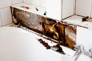 mold damage inside commercial property - cleanup tips