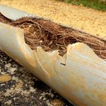 tree branches are common causes of sewer backup | DRS Disaster Restoration Services of Portland, Middletown, New Britain, New Haven, Norwich, CT, Springfield, Chicopee, Worcester, Framingham, MA, and Providence, Warwick, Taunton, and Fall River, RI