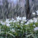 Don't Let Spring Storms Rain Damage on Your Home