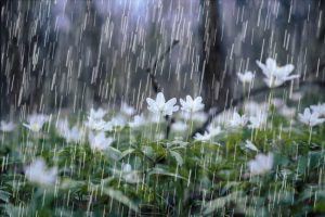 prevent spring storms from causing water damage to your home property | DRS Disaster Restoration Services of Portland, Middletown, New Britain, New Haven, Norwich, CT, Springfield, Chicopee, Worcester, Framingham, MA, and Providence, Warwick, Taunton, and Fall River, RI
