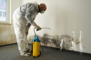 mold found in commercial spaces is not always visible | DRS Disaster Restoration Services of Portland, Middletown, New Britain, New Haven, Norwich, CT, Springfield, Chicopee, Worcester, Framingham, MA, and Providence, Warwick, Taunton, and Fall River, RI