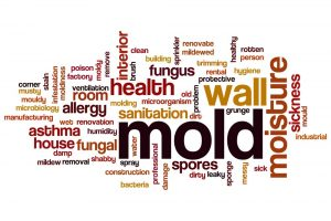 mold has many serious health hazards and when found needs to be properly cleaned up immediately | DRS Disaster Restoration Services of Portland, Middletown, New Britain, New Haven, Norwich, CT, Springfield, Chicopee, Worcester, Framingham, MA, and Providence, Warwick, Taunton, and Fall River, RI