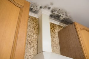 tips on how to remove mold from your home and wood structures | DRS Disaster Restoration Services of Portland, Middletown, New Britain, New Haven, Norwich, CT, Springfield, Chicopee, Worcester, Framingham, MA, and Providence, Warwick, Taunton, and Fall River, RI